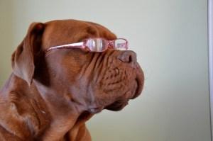 Que perro más listo. :)