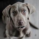 Tu perro te entiende cuando le hablas-Enriquecimiento ambiental y bienestar animal