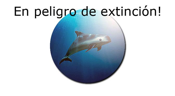 La Marina entrena delfines para proteger vaquitas marinas.