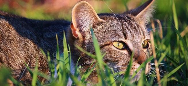 Gatos asilvestrados en zonas urbanas.