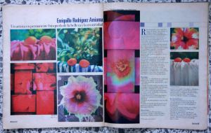 Magazine article about the art of Enriquillo Amiama