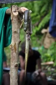Une anguille en guise de festin lors d'un week-end avec les Scouts du Vanuatu