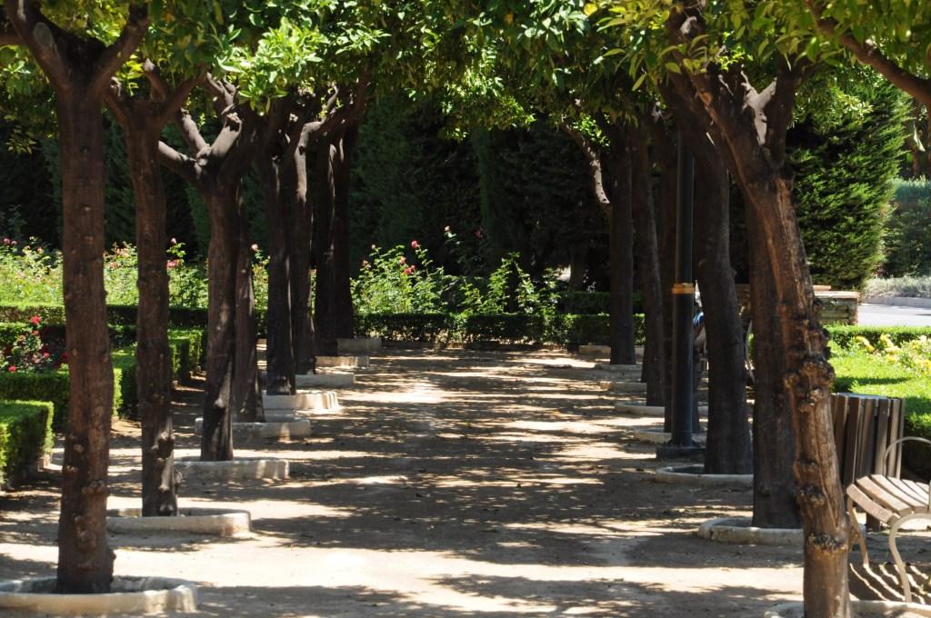 jardin-pedro-luis-alonso-roses-rangee-arbres