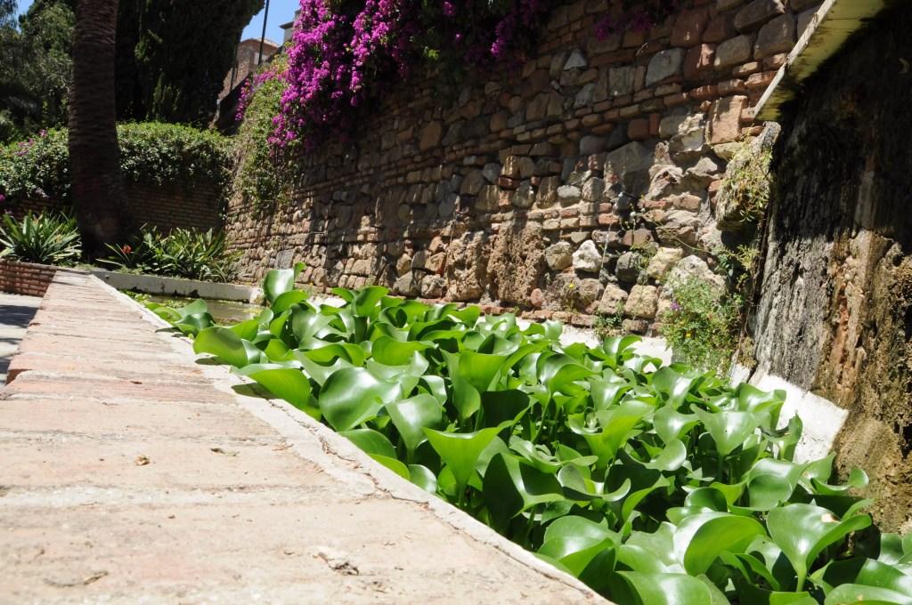 jardines-de-puerta-oscura-jacinthe-deau-bassin