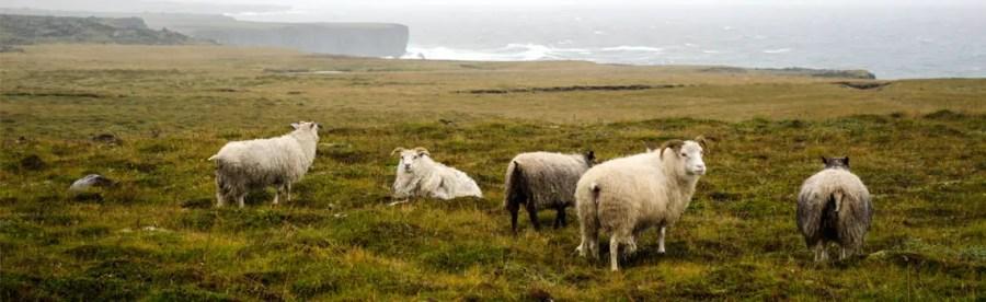 Islande : retour de voyage