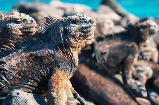 Voyage Iles Galapagos