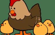 Mamá gallina y su pandilla