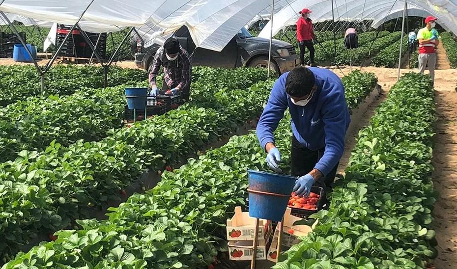 Un  aporte para las Comunas: Impacto de las Vitrinas Productivas Socialistas construidas bajo principios agroecológicos (Eficiencia energética en agroecosistemas urbanos y periurbanos).