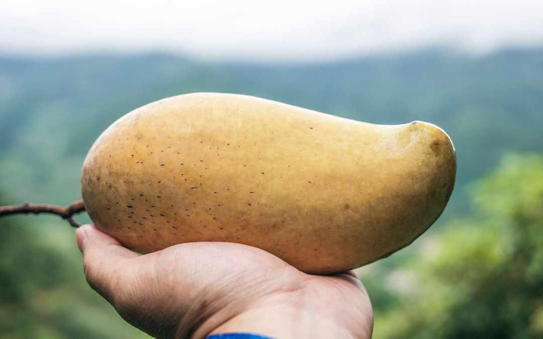 Mangues EcoPaix la qualité pour tous