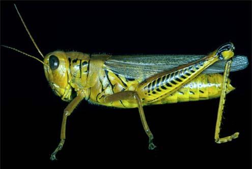Interactive Virtual Grasshopper