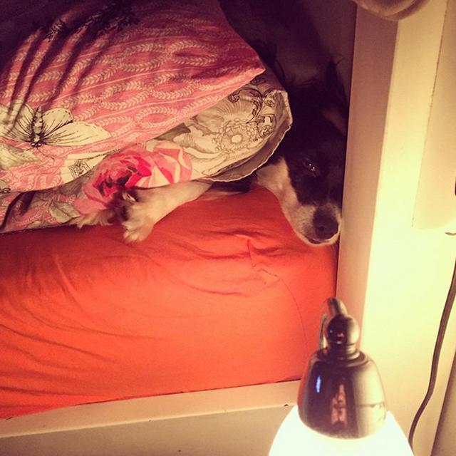 """Ela sempre deita na atrás do travesseiro """"esmagada"""", é o canto preferido dela na cama"""