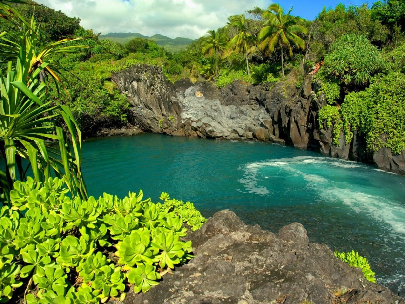 73195_Papel-de-Parede-Oahu-Havai--73195_1600x1200