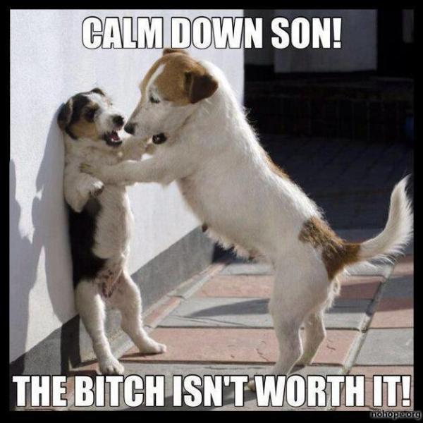 calm down funny dogs