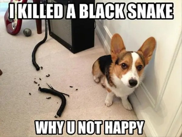 dog chews wire funny picture