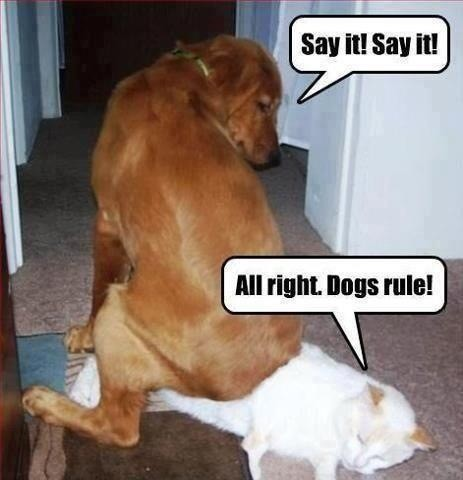 dogs rule funny picture