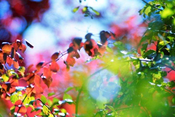 nature color blast wallpaper