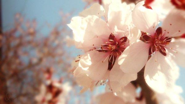 spring flowers wallpaper 15