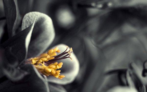 spring flowers wallpaper 2
