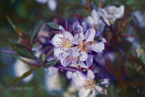 spring flowers wallpaper 21