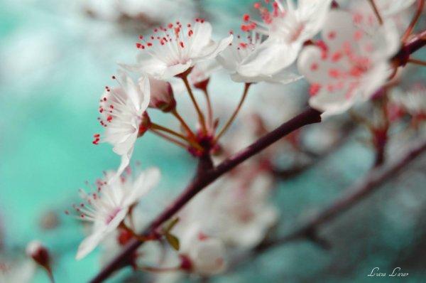 spring flowers wallpaper 7