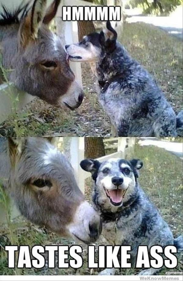 tasty ass dog funny picture