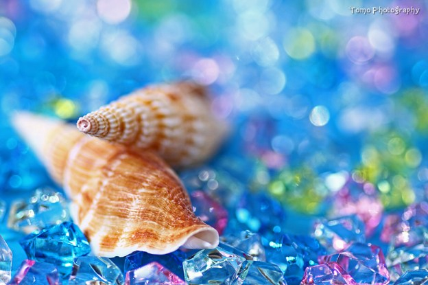 Shell - Summer Memory