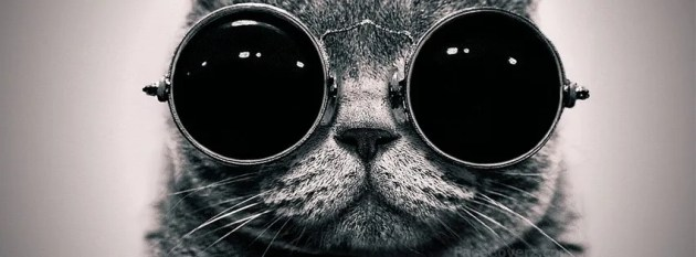 cool cat fb cover