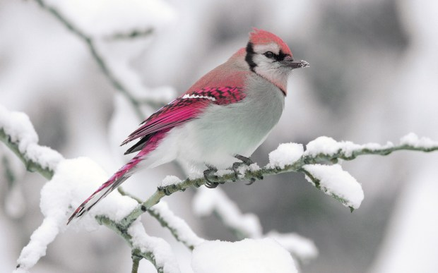 beautiful snow bird picture