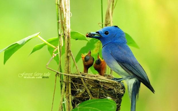bird feeding picture