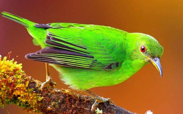 green color bird picture