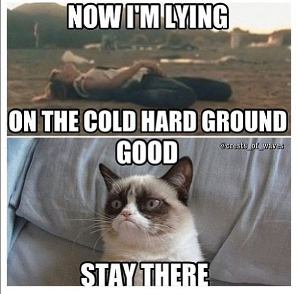 best-funniest-grumpy-cat