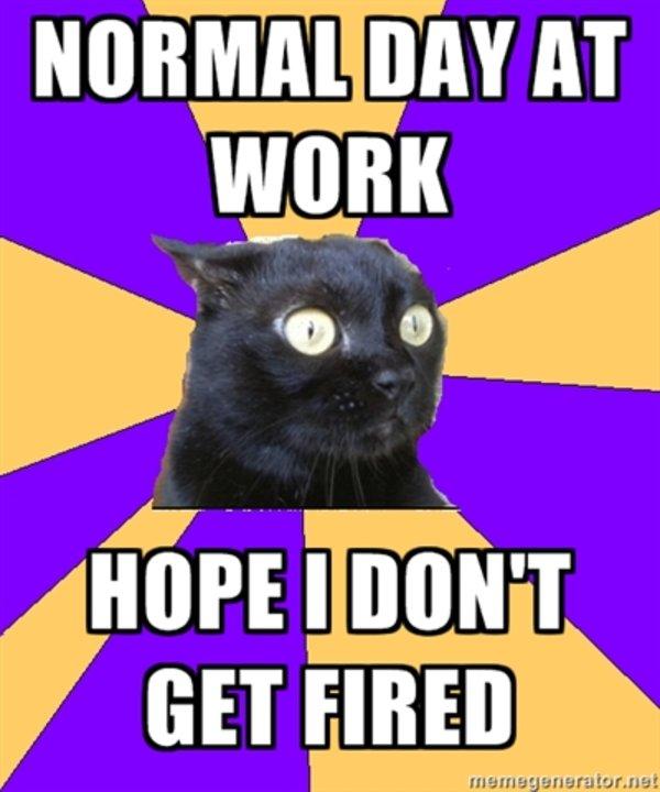 cute-funny-Cat-meme-27
