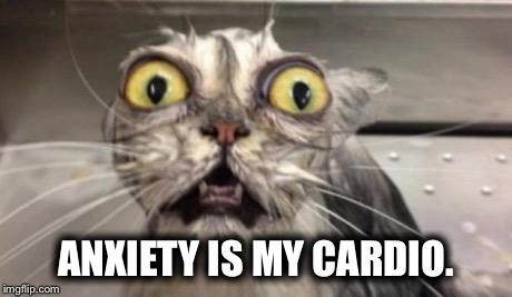 cute-funny-Cat-meme-29