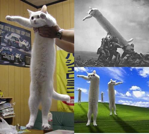 cute-funny-Cat-meme-22