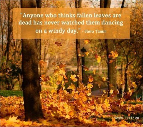 autumn leaves quotes