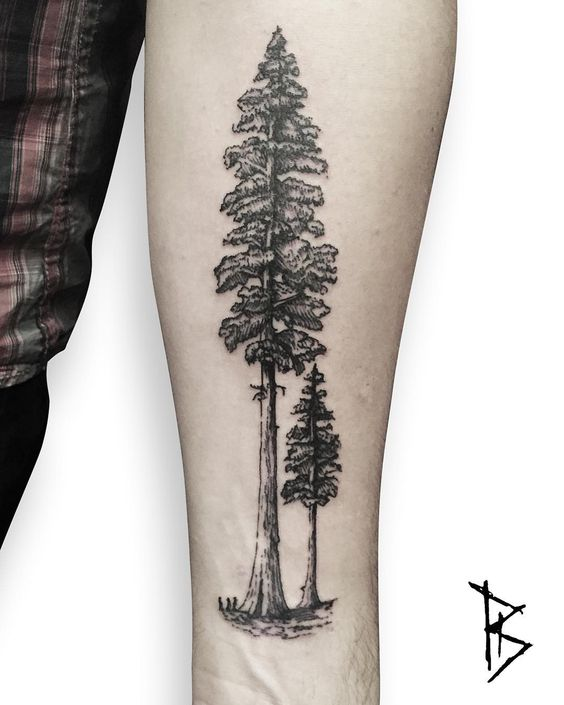 gorgeous evergreen tree tattoo on forearm