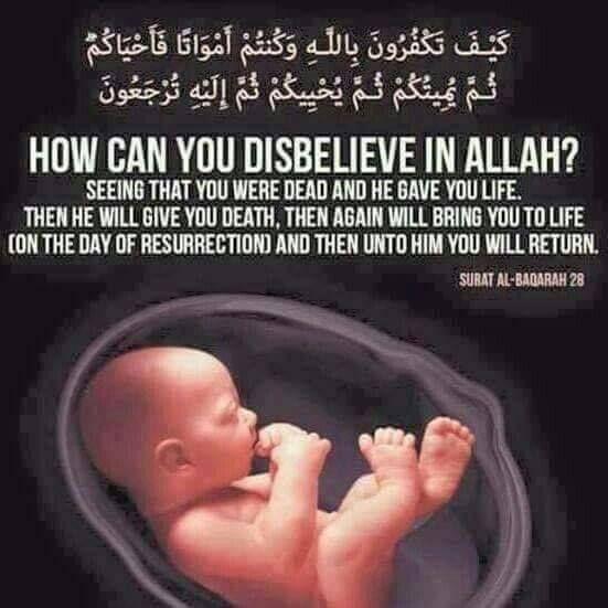 Quran Surah about life