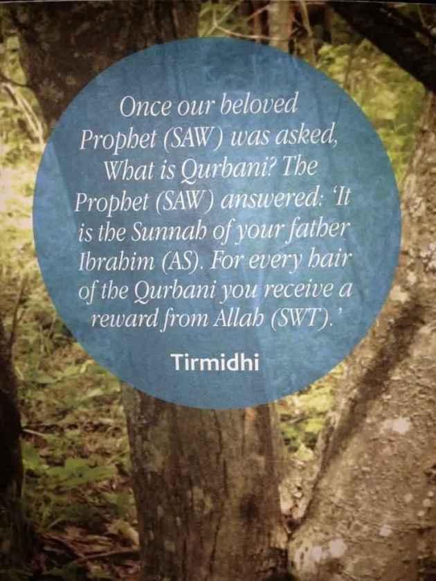 eid ul adha islamic quote