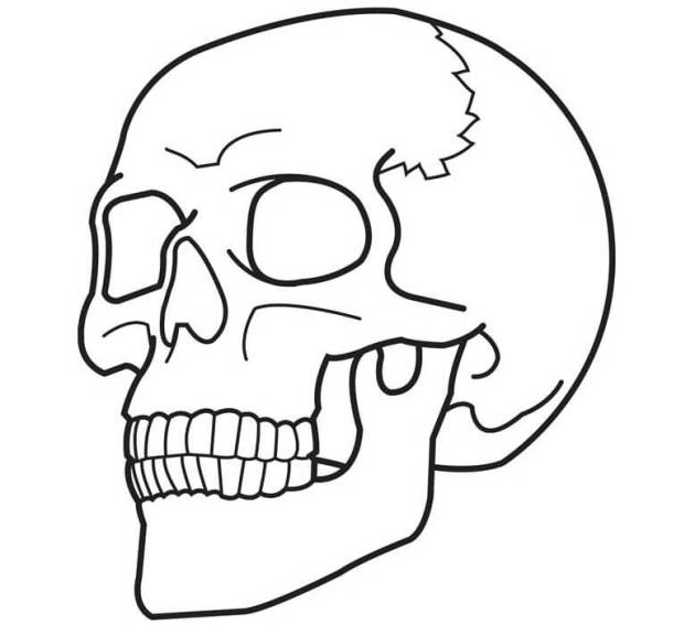 simple skull coloring picture