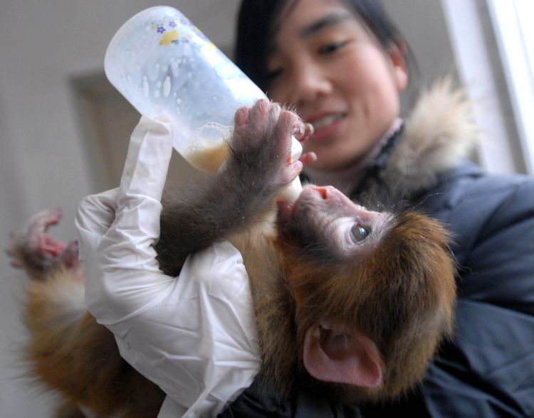 The baby macaque monkey, similar to this one, will continue to be called Charlotte.  (Phototex/WENN)