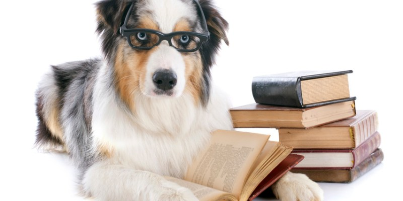 Has Writing Gone to the Dogs? Enthralled Magazine