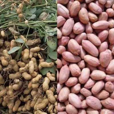 Peanuts farming