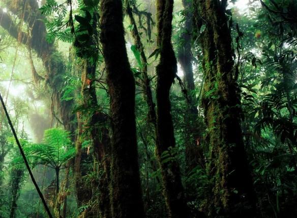 rain-forest-112172_1280