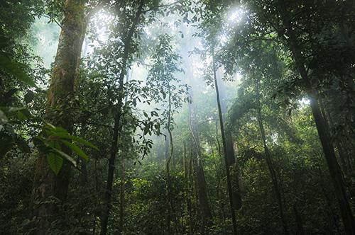 jungle-500x300