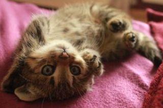 baby-cat