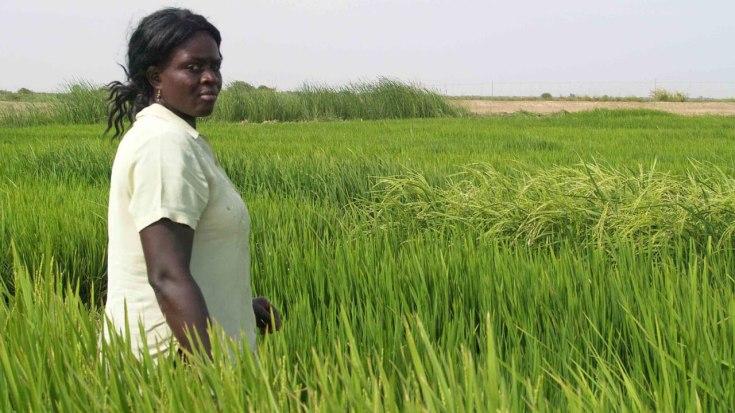 rice farming business plan sample