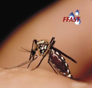 Aedes_Albopictus_Bayer