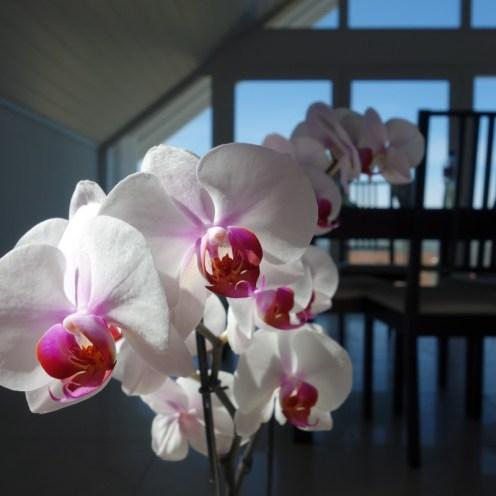 Projet 52 - fleur