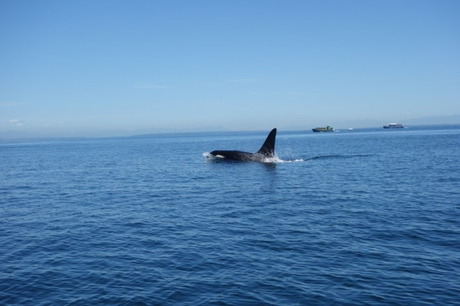 Whale watching - Ocean EcoVentures