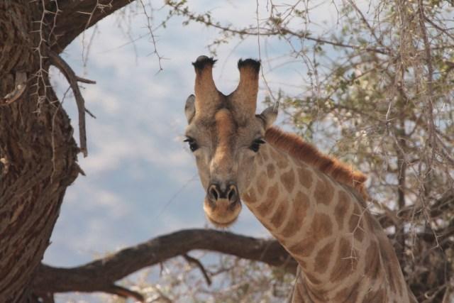 Etosha, Namibia 2